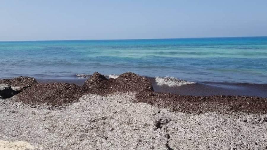 عاجل | بالصور | رئة البحر المتوسط.. حقيقة وجود تلوث بشواطئ إحدى قرى الساحل الشمالي